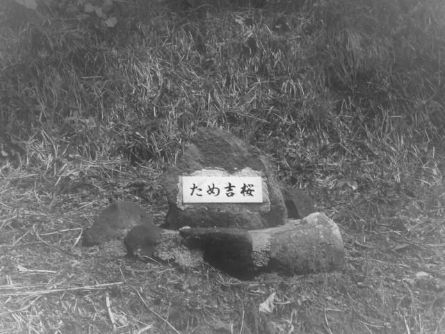 上黒川農村公園 ため吉桜の墓