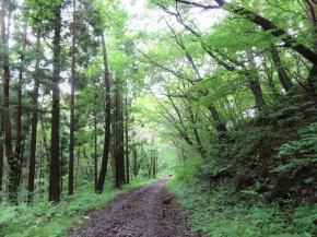 観音森 道中 サムネ