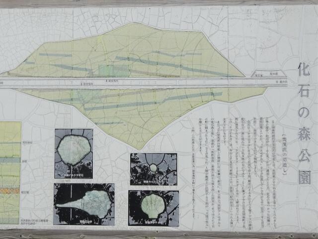羽後町化石の森公園